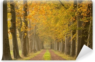 Sand lane with trees in autumn Wall Mural Pixers We live to change