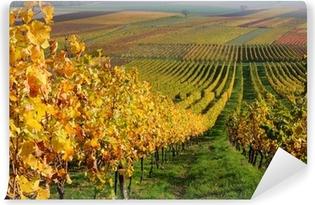 Autumn vineyard landscape in Rhine Valley, Germany Vinyl Wall Mural