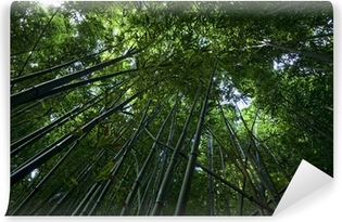 Bamboo Forest on Maui Vinyl Wall Mural