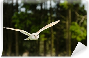 Barn owl flying Vinyl Wall Mural