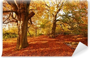 Beautiful Autumn in the Park Vinyl Wall Mural