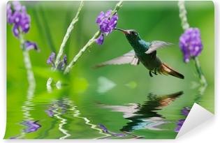 Beautiful hummingbird in reflection Vinyl Wall Mural
