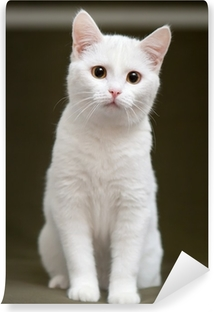 Beautiful white cat with yellow eyes sitting on blanket Vinyl Wall Mural