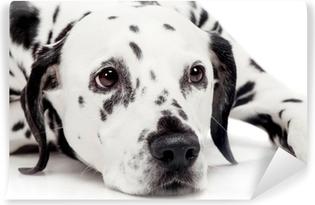 Beauty Dalmatian Dog Isolated On White Background Duvet Cover
