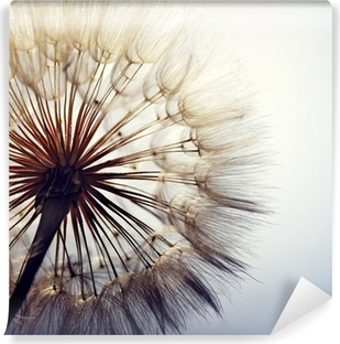big dandelion on a blue background Vinyl Wall Mural
