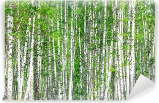 Birch forest. May Vinyl Wall Mural