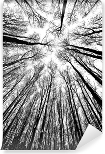 black and white trees silhouettes Vinyl Wall Mural