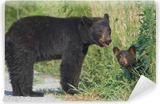 Black bear mother with cub. Alligator River NWR Vinyl Wall Mural