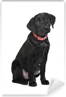 Black Labrador puppy Vinyl Wall Mural