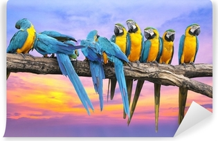 Blue and Yellow Macaw with beautiful sky at sunset Vinyl Wall Mural
