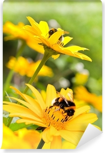 Bumble bees on sunflowers in summer garden Vinyl Wall Mural