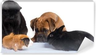 chien, chat, lapin, cochon d'inde ensemble Vinyl Wall Mural