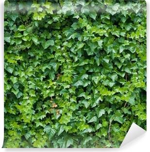 Climbing ivy background. Vinyl Wall Mural