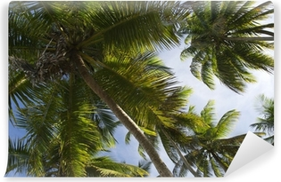 Coconut Palm Trees Grove From Below Vinyl Wall Mural