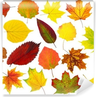 Colorful autumn leaves isolated on white Vinyl Wall Mural