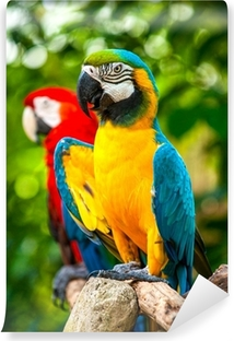 Colorful blue parrot macaw Vinyl Wall Mural