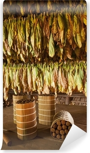 Cuban cigars in drying house Vinyl Wall Mural