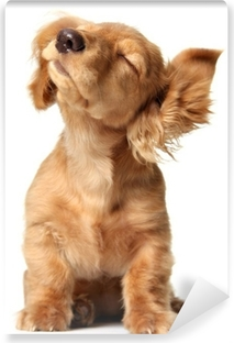 Cute puppy listening to music, also available with headphones. Vinyl Wall Mural