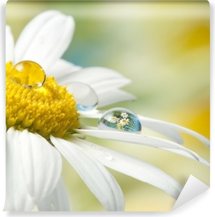 daisy with drop with mirroring effect Vinyl Wall Mural