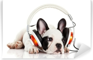 dog listening to music with headphones isolated on white backgro Vinyl Wall Mural