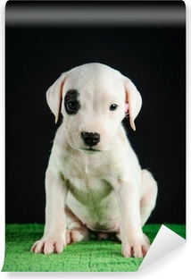 Dogo Argentino puppy Canvas Print • Pixers® • We live to change