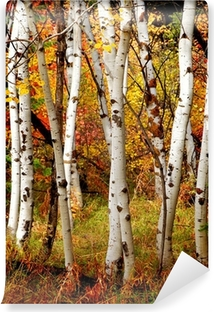 Fall Birch Trees Vinyl Wall Mural