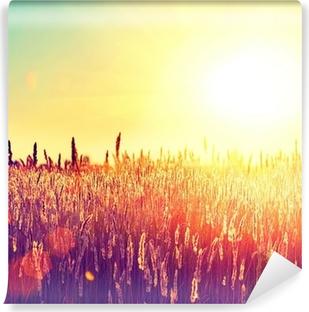 Field. Rural Landscape under Shining Sunlight Vinyl Wall Mural