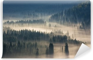 fir trees on a meadow down the will to coniferous forest in foggy mountains Vinyl Wall Mural