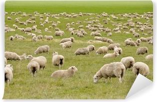 Flock of sheep in New Zealand Vinyl Wall Mural