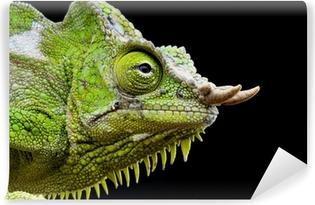Four-horned chameleon / Trioceros quadricornis Vinyl Wall Mural