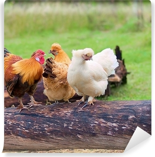 Free range live poultry fowls Vinyl Wall Mural