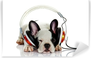 french bulldog with headphone isolated on white background Vinyl Wall Mural