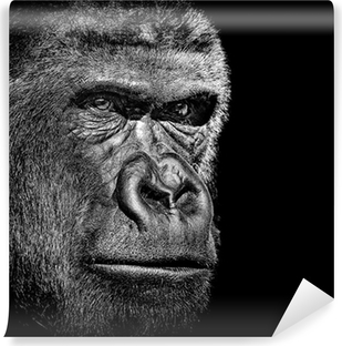 Gorilla portrait Vinyl Wall Mural