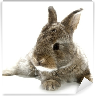 Gray rabbit bunny baby isolated on white background Vinyl Wall Mural