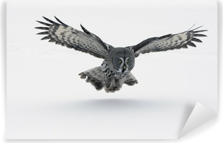 Great-grey owl, Strix nebulosa Vinyl Wall Mural