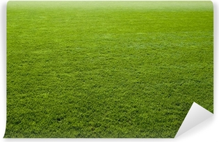 Green grass texture of a soccer field. Vinyl Wall Mural