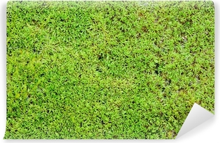Green moss background Vinyl Wall Mural