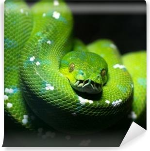 Green snake Vinyl Wall Mural