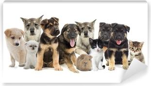 group of pets Vinyl Wall Mural