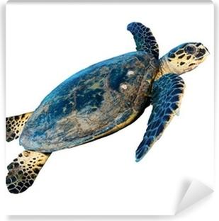 Hawksbill sea turtle (Eretmochelys imbricata), on white. Vinyl Wall Mural