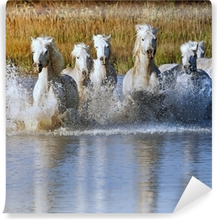 Horse Splash Vinyl Wall Mural