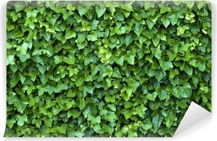 ivy wall Vinyl Wall Mural