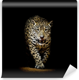 Leopard portrait Vinyl Wall Mural