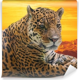 Leopard to lie on a log against a sunset Vinyl Wall Mural