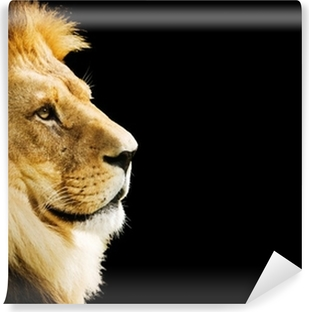 Lion portrait with copy space on black background Vinyl Wall Mural
