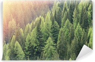 Magic forest lit by the sunlight. Coniferous forest region. Vinyl Wall Mural
