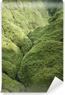 Maui Rainforest. Vinyl Wall Mural