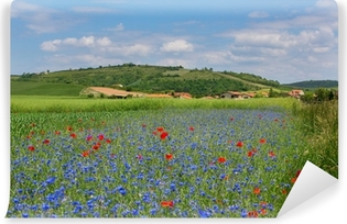 Meadow with cornflowers and poppies in Auvergne Vinyl Wall Mural