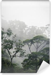 misty jungle forest Vinyl Wall Mural