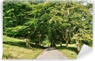 Narrow lane through an avenue of Lime trees. Vinyl Wall Mural